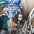 Munich 31 - Hofbraeu horse detail