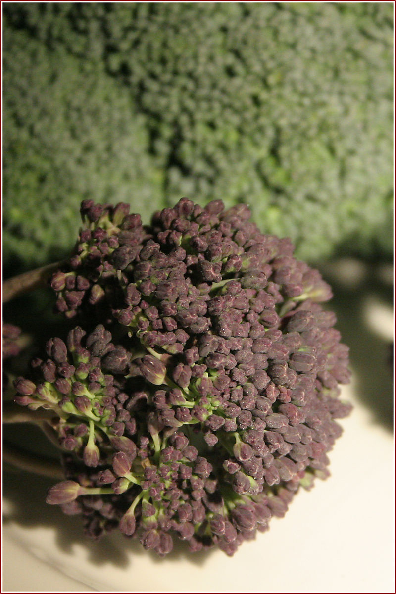 PurpleSprouting Broccoli2